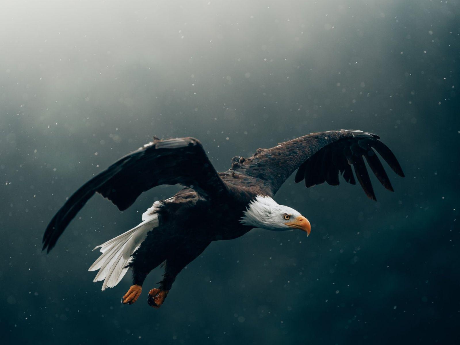 Nous sommes les aigles du Seigneur